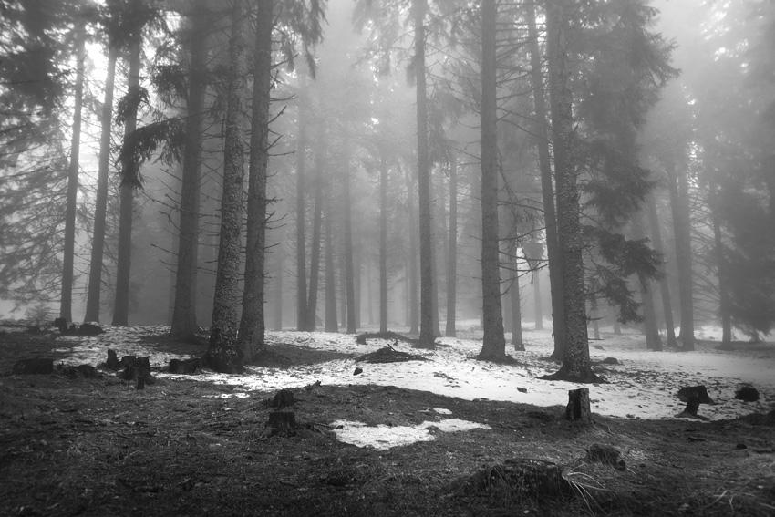 Запази гората -Петър Крусев